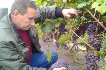 Владимир Попченко, виноградарь ,фото