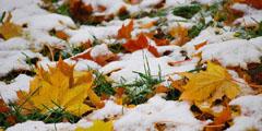 осень, ноябрь, фото