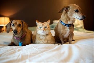 коты, собаки, фото
